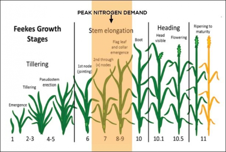 Peak Nitrogen Demands are NOW