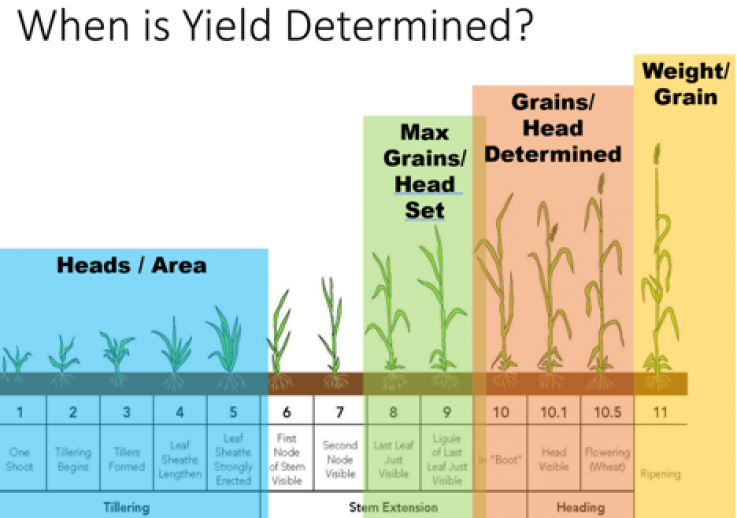 How do you keep fall-applied nitrogen accessible at peak demand in April?